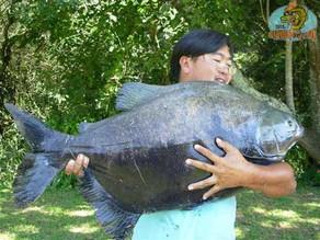Centro de Pesca Taquari – Apesar do frio, muitos peixes foram fisgados!