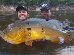 Os Tucunarés Vazzoleris do Rio Paratucu-Nhamunda - Amazonas