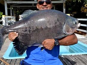 Fazenda Paraná – Os grandes peixes no inverno mineiro