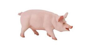 Nova isca para pesca: Fígado de porco curtido no fubá