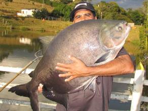 Fazenda Paraná – Equipe Fishingtur novamente na terra do queijo e dos Gigantes Redondos e Surubins