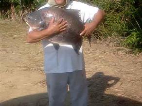 Pesqueiro Três Irmãos – Uma ótima opção no litoral sul de SP