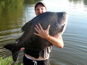 Pesqueiro Toca do Jacaré - No Paraná também tem pescaria boa