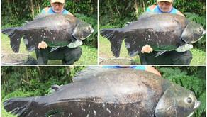 Pesqueiro Sol – Peixes fisgados a todo momento neste ótimo pesqueiro