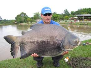 Pesqueiro Hikari – Um show de peixes em território Paranaense