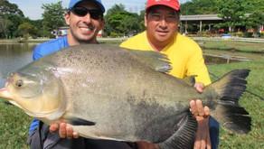 Pesqueiro Hikari – Veja como foi o nosso terceiro dia de pescaria com grandes redondos