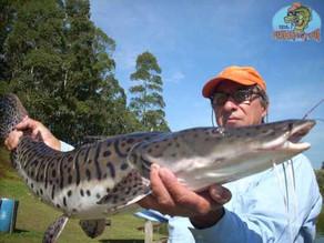 Pesqueiro Taquari – Início de inverno, muito frio e muito peixe na linha
