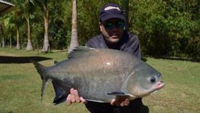 Três Ilhas Clube de Pesca e Lazer– Equipe Fishingtur em novo Point no Estado de Goiás.
