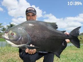 Pousada 4 Estações - mais de 1.300kg de tambas em 3 dias de pesca