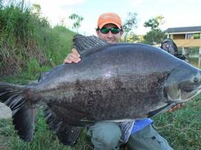 Fazenda Paraná - Os grandes peixes sempre com o Fishingtur