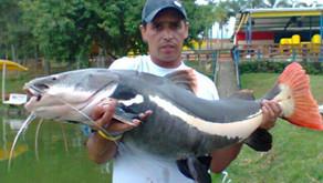 Pesqueiro Boitupesca - A casa dos grandes redondos e pirararas