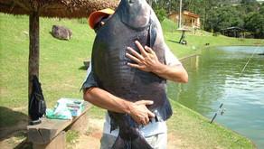 Pesqueiro Taquari – Muitos gigantes na parte rasa do lago