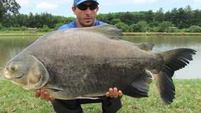 Pesqueiro Hikari - Nosso último dia de pescaria no Paraná