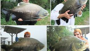 Sol Pescarias – Um ótimo pesqueiro com bom atendimento e muitos peixes
