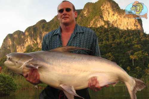 Chao Phraya Cat Fish
