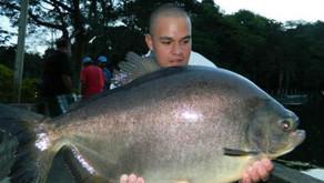 Pesqueiro Cantareira - Pescaria com bonitos exemplares
