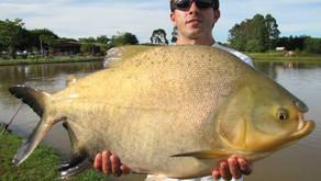 Pesqueiro Hikari – Uma ótima opção de pesca com grandes peixes em Maringá