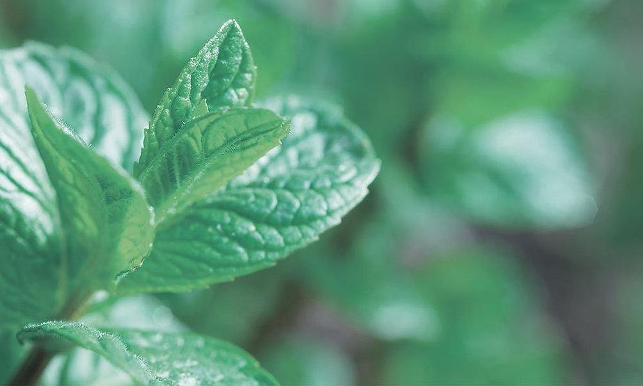 top_herb_peppermint.jpg