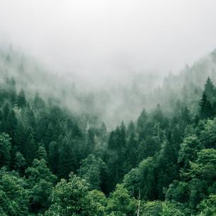 440 Bäume pflanzen: So viel reicht, um dein CO2-Fußabdruck zu neutralisieren!