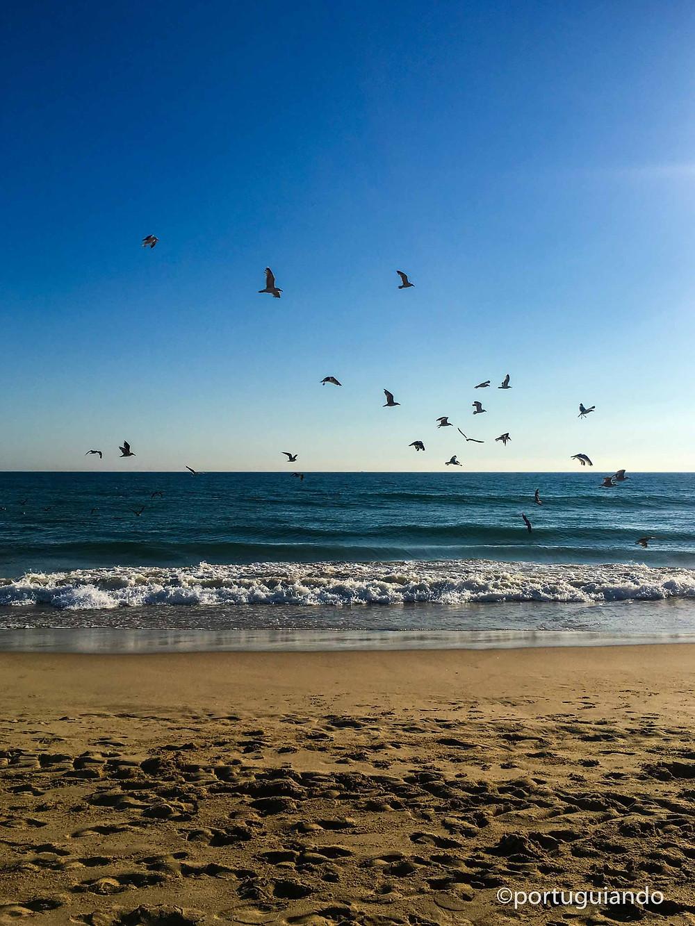 Praia de Montijo