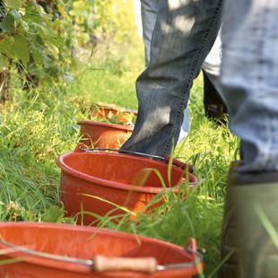 Neuntes BDO-Web-Seminar zu Herausforderungen der Betriebsnachfolge bei Weingütern