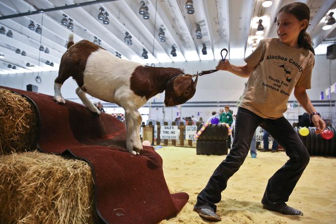 Alachua County Youth and Livestock Fair