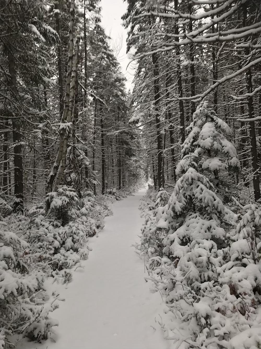 Moose Bog Trail