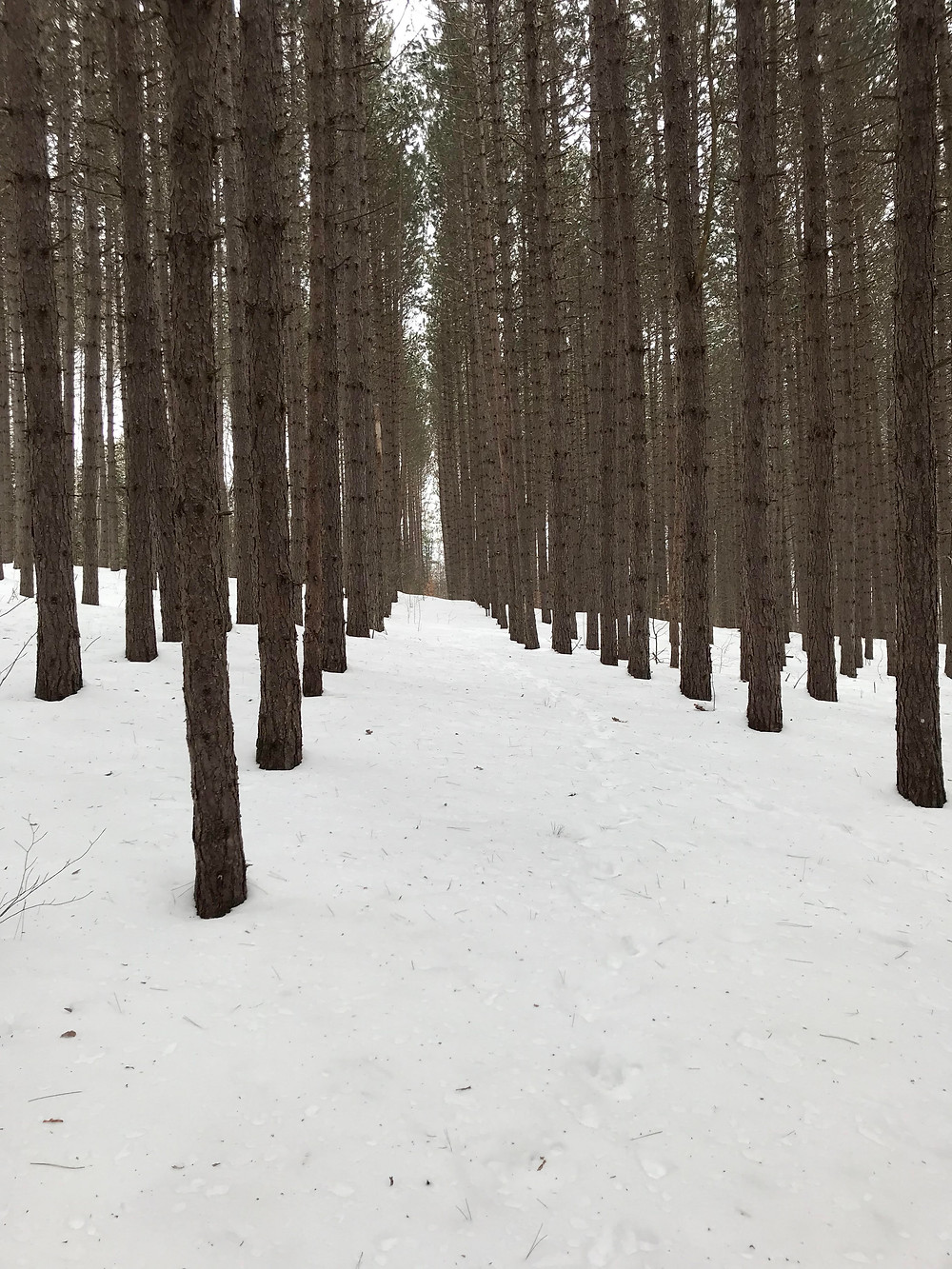 The woods at the start of the Bluff Mountain Trail