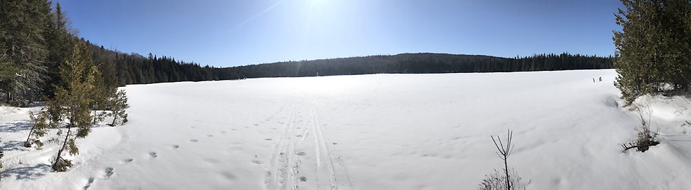 View of the frozen pond
