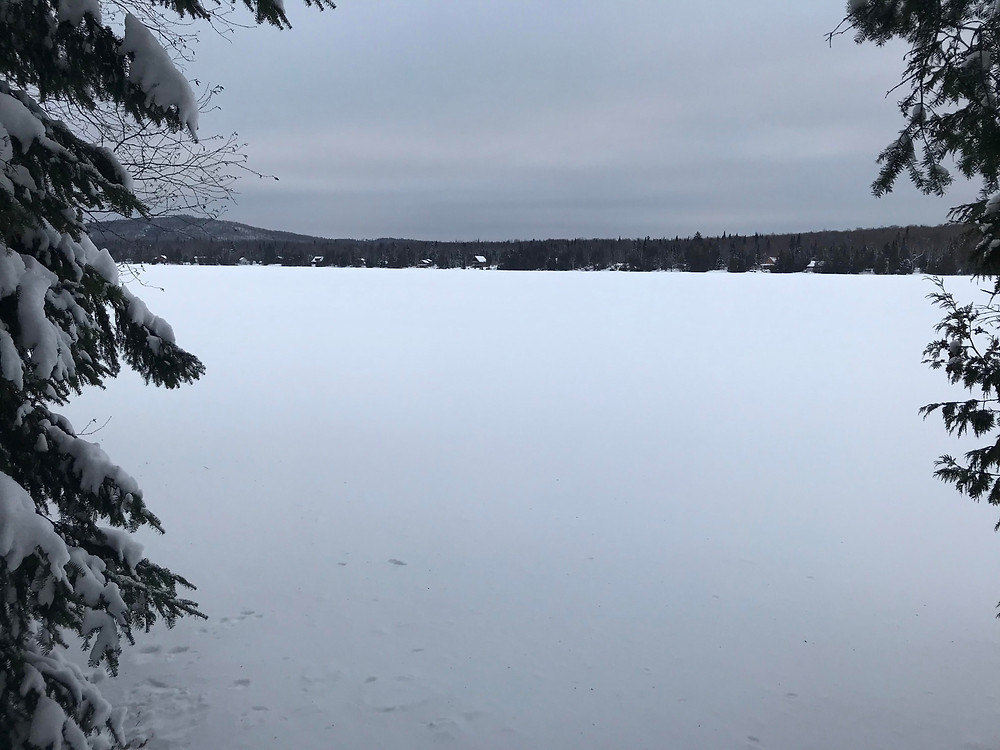 View of Newark Pond from the trail