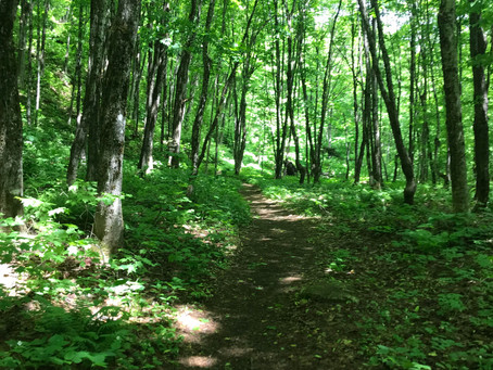 Herbert Hawkes Hiking Trail