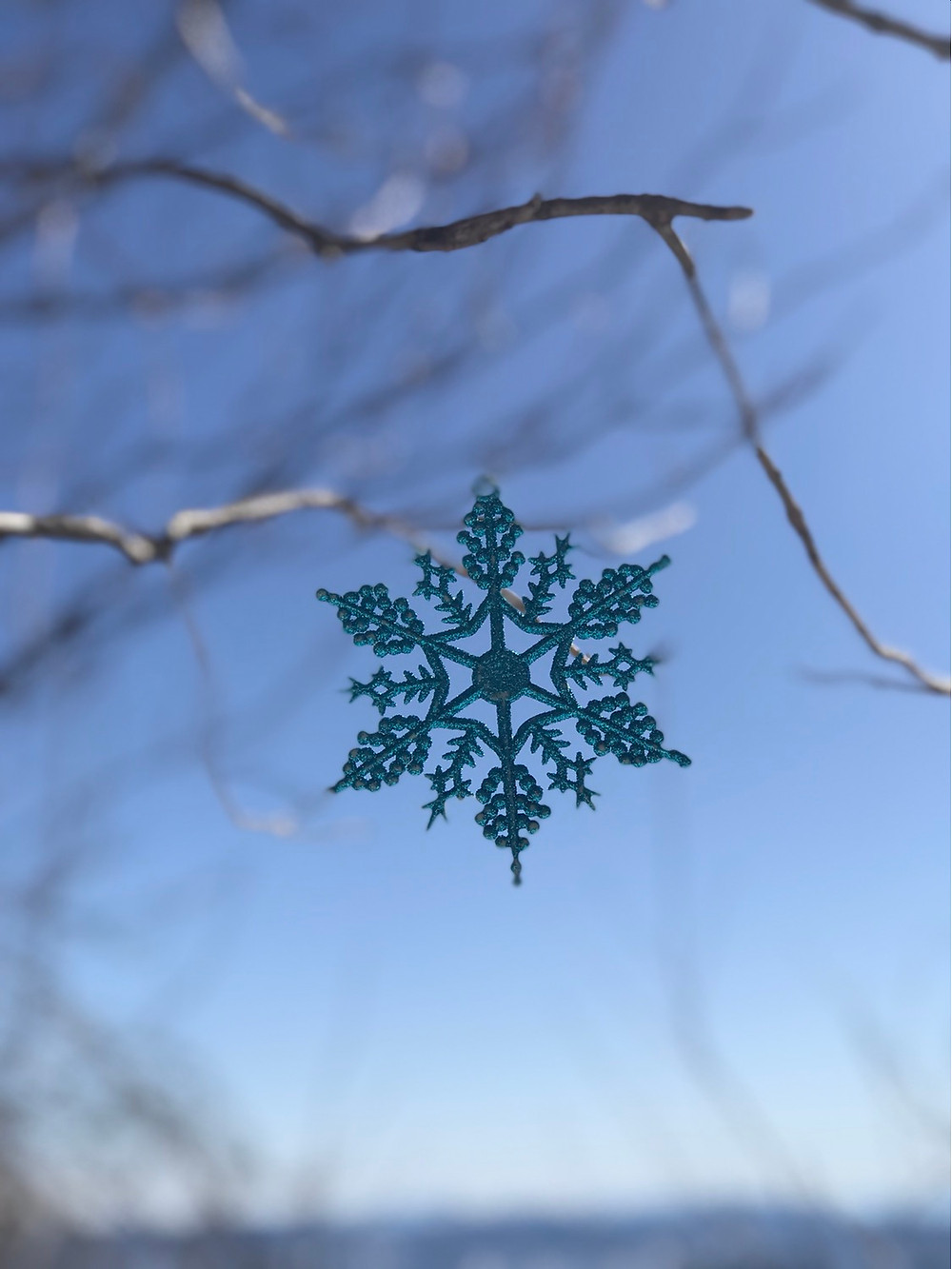 Snowflake someone left in the tree at summit