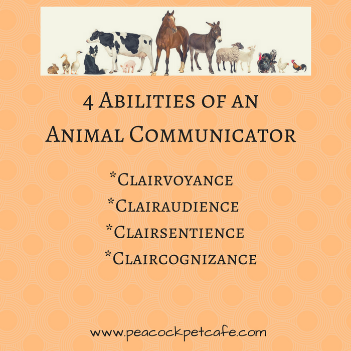 What is a Pet Psychic & How do they Talk to Animals?