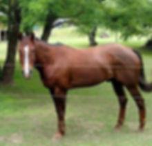 Turbo Mariahs horse.jpg