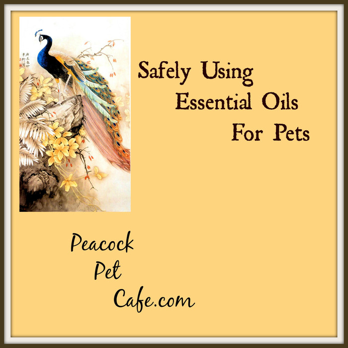 Safely Using Essential Oils with Pets