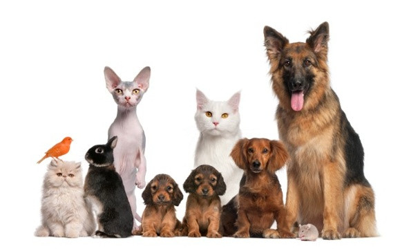 20 Natural Ways to Support Your Pets Immune System