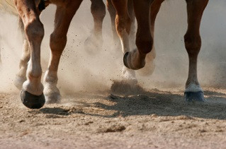 Horses Hooves -Utilizing Essential Oils to address hoof issues.