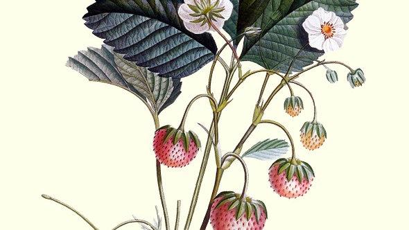 Vanilla & Strawberry Diffuser