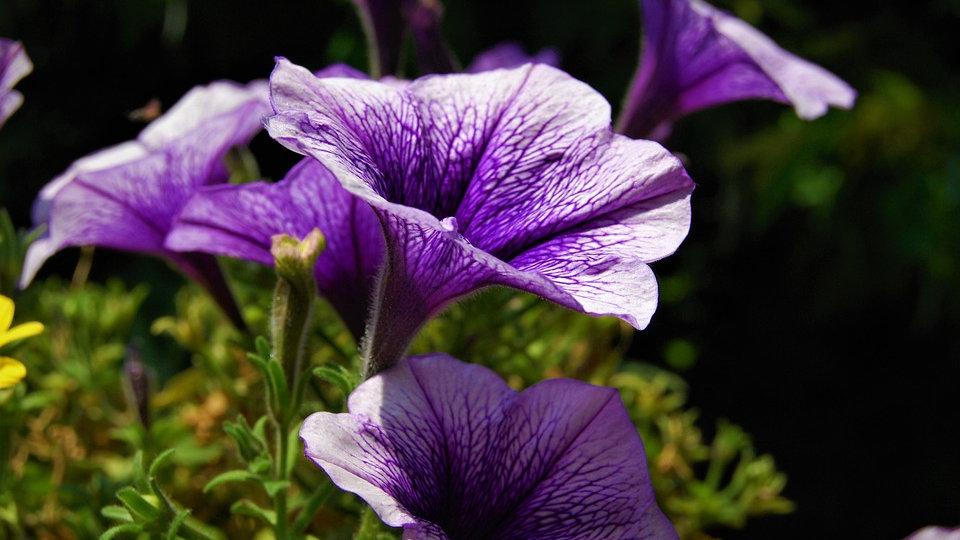 Bergamot, Geranium & Lavender Diffuser Oil