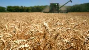 Productividad e impacto ambiental: el gran desafío para el agro