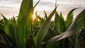 Biosoluciones: de mitigar el estrés de los cultivos a maximizar el uso de los recursos
