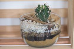 vidrio cactus zen
