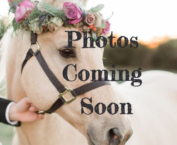 2b330d1f99b452451a3d9c1a113e4aed--horse-