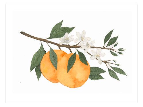 Orange Blossum Print
