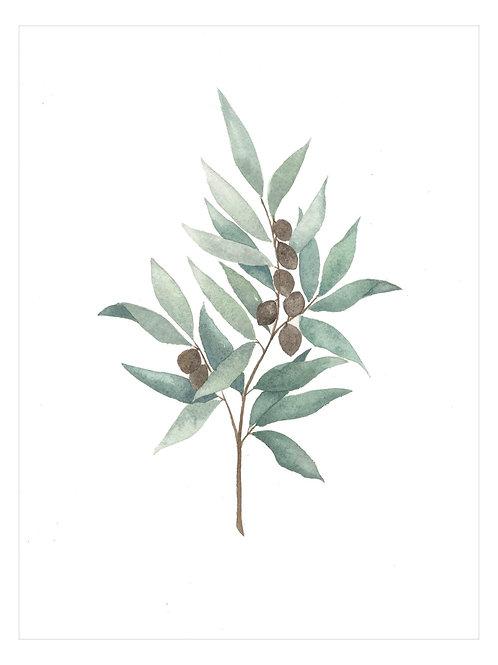 Olive Branch Print