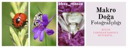 bboz_macro_caps_155