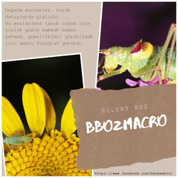 bboz_macro_caps_112