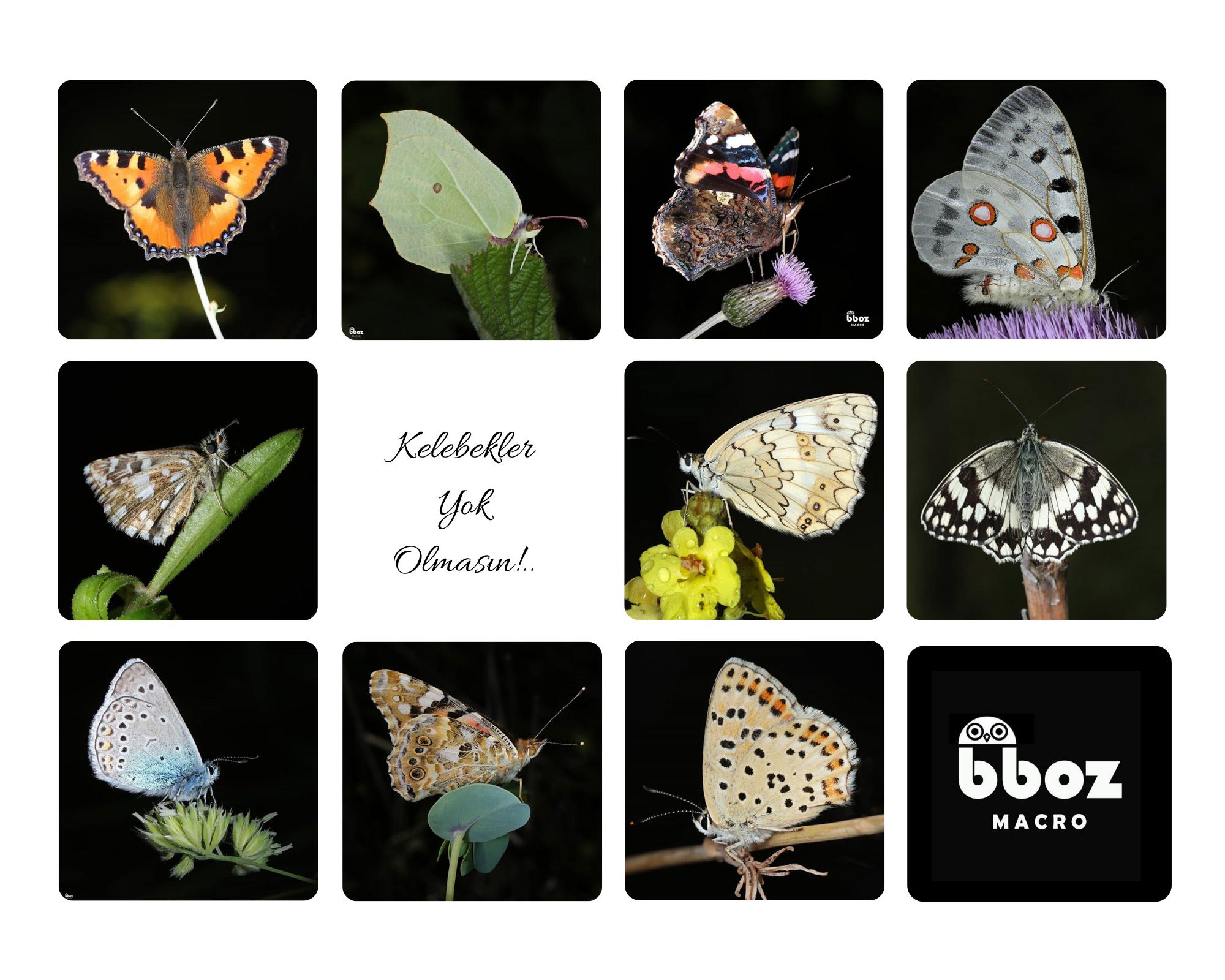 Kelebekler Yok Olmasın