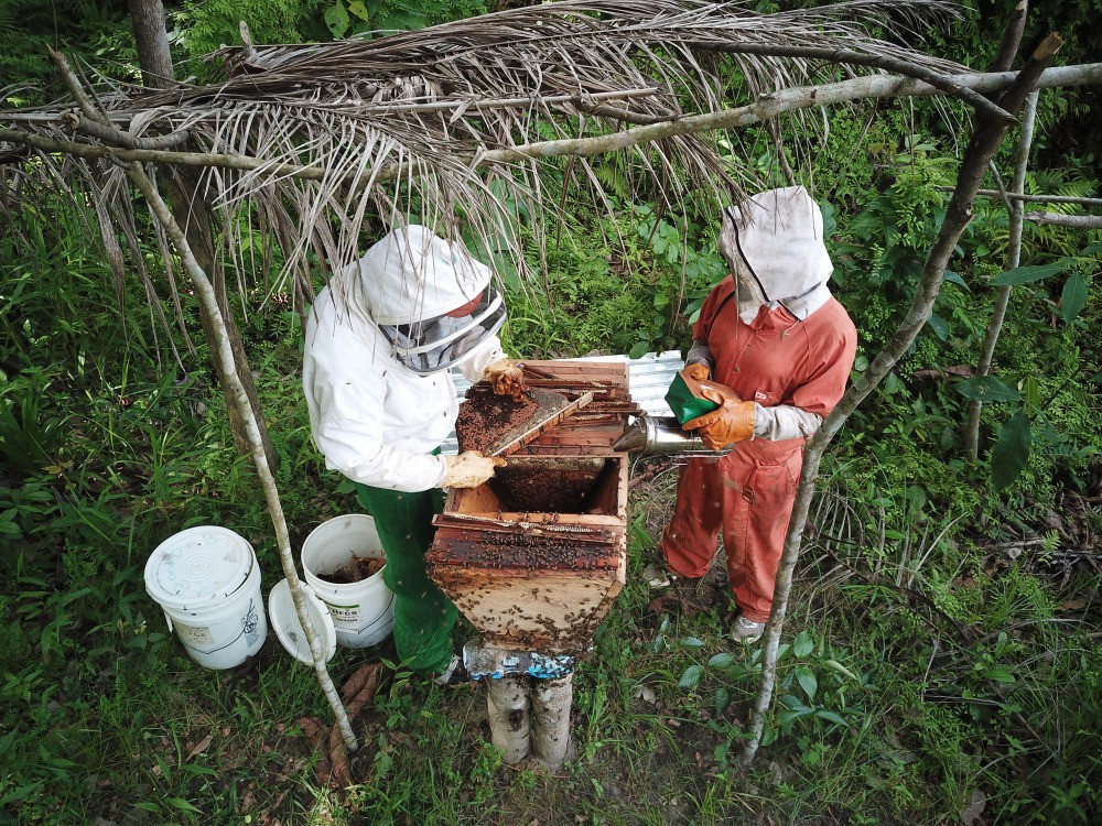 Extension worker training new beekeeper