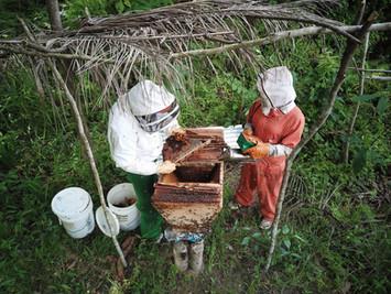 Extension worker training new beekeeper